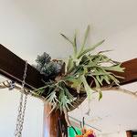 流木と造花のショップディスプレイ 花ひろ 鯖江 緑化