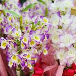 デンドロビュームの蘭鉢