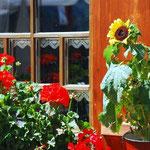 Walser Fenster