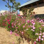 十八間蔵を横から見たところ(2014/09/27)