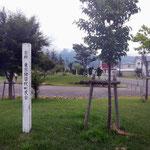 町民会の寄付したオオヤマサクラ
