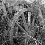 Wagon Wheel in Black and White