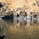 Fish On....8+Ft. Sturgeon Jumping