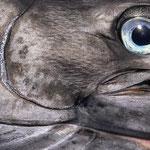 Marlin Eye