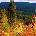 Fall on Mica Mt.