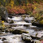 Orogrande Creek