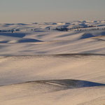 Palouse Winter Fields