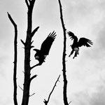 Eagles I