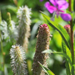 Wild Grass and Fire Weed