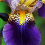 The Landscape of the Iris