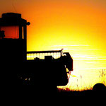 Swather Sunset I