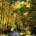 Northfork Road