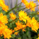 Alaskan Blooms
