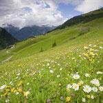Alpen Landschaft