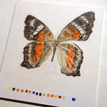Buntstiftstudie | Insekt | Zeichnung im Maßstab 1:1 | Fotorealismus
