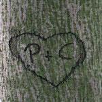 Klappkarte aussen | Hochzeit | im Wald | Fotomontage | Herz | Retusche