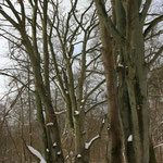 im Darßwald