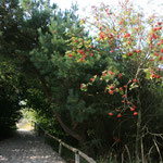 Herbstfarben und Herbstnebel kurz vor...
