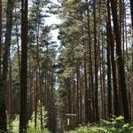 im Darßwald-Märchen