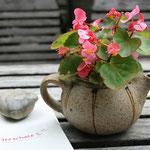 """…und die """"Teeschale"""" in Prerow - Café mit u.a. hausgemachter Keramik und durftendem Teeladen"""