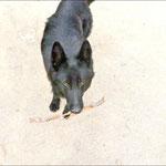 Ein Hund, der immer spielen will