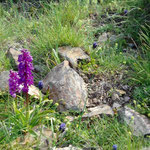 Orchideen am Weg