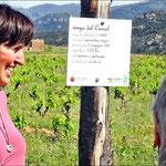 Eine Tafel gibt Aufschluß über ein Weinfeld