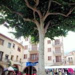 Der Freiheitsbaum in Arbucies