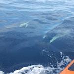 Delphine ganz nah