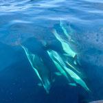 Delphine in freier Natur