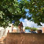Zitronen und Feigenbäume