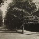 Mary Road