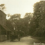 Beech Lane, c. 1905. This is Gospel Lane. Beech was a farmer at Redstone Farm, which was at the Warwick Road, but gave its name to the far end of Gospel Lane in Hall Green.