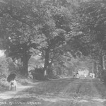 Dolphin Lane, c. 1905. This beautiful view reveals the kind of countryside lost when the area was urbanised in the 1920s. Dolphin Lane was also known as Shady Lane, clearly very appropriate. The Dolphin pub was at the Warwick Road end of this lane.