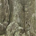 Haus im Baum
