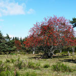 L'automne à Cros de Géorand - Cros de Géorand - (Alban)