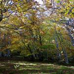 L'automne à Cros de Géorand - Cros de Géorand - (David)