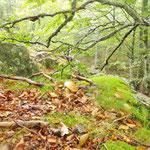 L'automne à Cros de Géorand - Cros de Géorand - (Audrey)