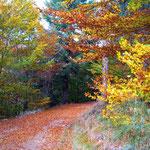 L'automne à Cros de Géorand - Cros de Géorand - (Cécile)