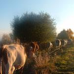 L'automne à Cros de Géorand - Cros de Géorand - (Denis J.)