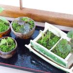手作り鉢 ミニ盆栽