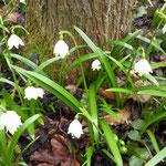 Frühling bei uns im Wald