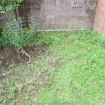 芝生、改修前。10年以上経ち、芝生が雑草だらけに。