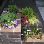 花壇、花の植替え