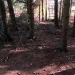 Pirschpfad zum Rückeinsteiger im Waldrand. Von hinten kommen. Nicht vorne am Waldrand entlanglatschen!