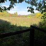 Blick vom Sitz von Foto 4 auf eine Blühfläche