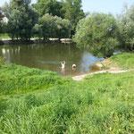 Eigentlich haben wir uns über die sehr späten Öffnungszeiten der Dusche beim Zuber anfänglich geärgert. Nach Wikingermanier haben wir aber dann das Beste draus gemacht - wozu fließt schließlich die Donau am Lager vorbei?