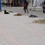 Hunde liegen und die Menschen plündern