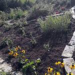 Neugestaltung Pflanzflächen