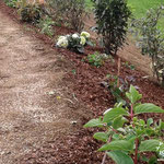 Böschungsbepflanzung